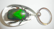 Insect Keyring Unicorn Green Rose Chafer Beetle Specimen SK09 Clear