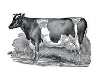 Cow Illustration Farm VINTAGE ENAMEL METAL TIN SIGN WALL PLAQUE