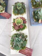 Wedding centerpiece succulents and reclaimed wood. Rustic centerpiece, succulent