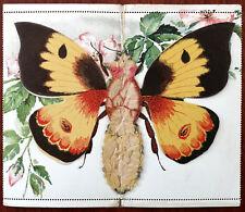 Kartenbrief Vintage Butterfly Letter-card