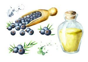 Reproduction 'Oil & Berries' Poster