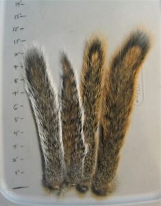 1 Squirrel Tail>Grey OR Fox squirrel tails>#1 GRADE Tails>COMBINE SHIPPING