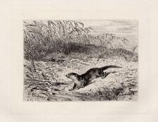 "Outstanding 1800s ORIGINAL KARL BODMER Etching ""Playful Otter"" SIGNED Framed COA"