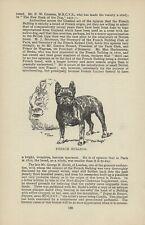 FRENCH BULLDOG OLD ANTIQUE 1912 DOG PRINT ARTIST ARTHUR WARDLE