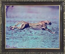 "Running Cheetah ""Spotted Wind"" Wildlife Animal Wall Art Decor Framed Picture"