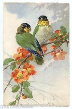 illustrateur C . KLEIN . Oiseau . Perruche . Bird . Parakeet. 鳥  .