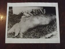 1945 PRESS PHOTO - DEMARK FEEDING EUROPE - MOTHER AND BABY PIGS