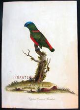 1794,HAYES PORTRAITS HANDPAINTED COPPER SAPPHIRE CROWNED PARRAKEET VRA