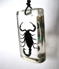 Real Scorpion Insect Sq block Glass Goth Necklace & Pendant Strange Gift Scorpio