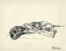 "Vere Temple 1937 Airdale Irish Welsh Terrier Type Vintage Art Print ""Zillah"""