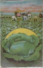 1913 Buckbee's Christmas King Cabbage Rockford IL advertising postcard