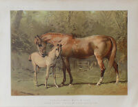 1876 Antique Chromo HORSE Print THOROUGHBRED MARE & FOAL - Alfred Corbould