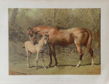 1876 Antique HORSE Print THOROUGHBRED MARE & FOAL Chromolithograph