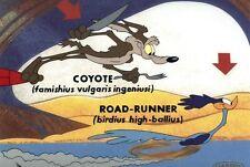 Road Runner Wile E. Coyote Cel Faimishius Vulgaris Rare Number 1 Artist Proof