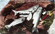 1915 Glacier National Park Mackinaw Trout Fishing Great Northern Rwy Postcard AP