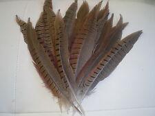 lot de 15 plumes faisan 12  cm