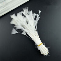 "20 pcs  WHITE Stripped Pheasant Plumes Feathers Millinery and Crafts 4"" - 6"""