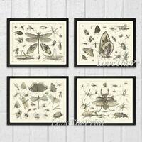 Unframed Botanical Print Set 4 Antique Butterflies Black and White Home Wall Art