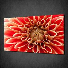 STUNNING RED DAHLIA FLOWER MODERN CANVAS PRINT WALL ART PICTURE READY TO HANG