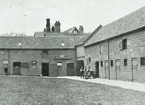 Duke Of Westminster Eaton Hall Stud 1913 3 Page Photo Article K813