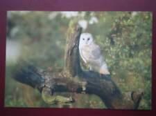 POSTCARD ANIMALS BARN OWL BIRDS OF BEDFORDSHIRE