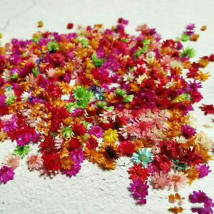 200pc Dried Flowers For DIY Art Craft Resin Candle Making Jewellery accesories
