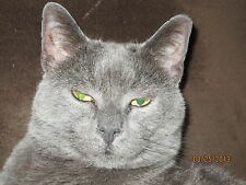 Sponsor Gandy--A Rescued SCOOP Cat for 1 Month--Receive His Picture & Story