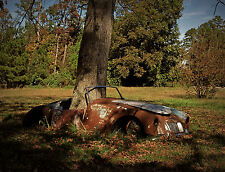 1960 MGA 1600 with large oak tree growing up thru interior  8 x 10 Photograph