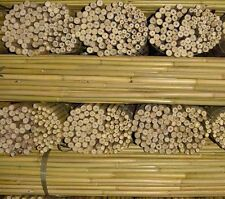 More details for 8ft strong bamboo canes 18/20mm diameter ideal for runner beans & sunflowers