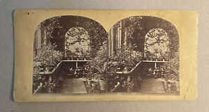 Conservatory Plants Greenhouse, Stereoview Slide, Vintage Collectible Photograph