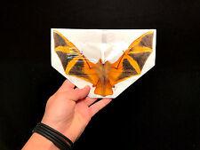 Taxidermie Cabinet de curiosité Chauve souris jaune Bat Kerivoula Picta!!