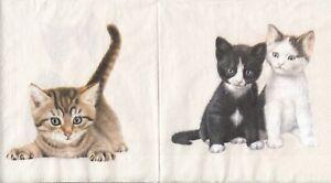 3 Lunch Papier Servietten Napkins (H15-20)  süße Katzen - 4 Motive