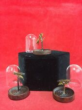 SALE*PWWD--Preserved  Wasp Glass Dome Display Paper Wasp-entomology-insect-bee
