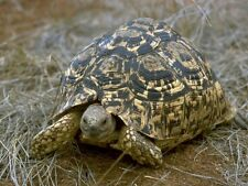 Shelled Warriors Sulcata, Leopard, Star Seed Mixes x2 packs of seeds