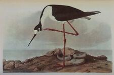 ANTIQUE 1937 AUDUBON PRINT - No. 328 BLACK NECKED STILT - FREE SHIPPING !!