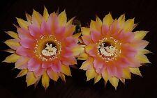 ECHINOPSIS UTOPIAN DREAM (LARGE FLOWERED HYBRID) IN BUD