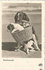 Hund, Familenzuwachs, Welpe im Weidenkorb, Foto-Ansichtskarte von 1930