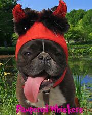 """Little Devil Halloween devil costume for dogs 12-15"""""""" collar size"""