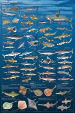 Sharks And Kin Poster Print, 24x36