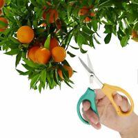 Bonsai Stainless Scissors Garden Hand Pruner Secateurs Branch Cutting Equipment
