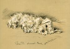 More details for sealyham terrier dog antique art print -