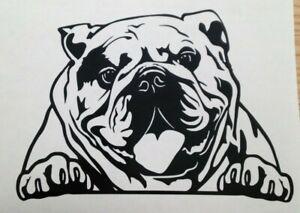 1x English Bulldog Dog Love Pet Animal Vinyl Sticker Bumper Decal Graphic 6x4in