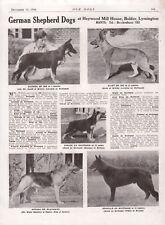 GERMAN SHEPHERD DOG 1944 DOG BREED KENNEL ADVERT PRINT PAGE ISK & HVITSAND