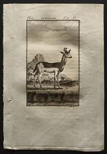 1799 - Buffon - Le nanguer - Gravure zoologie