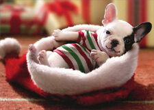 Puppy Sitting In Santa Hat Box of 10 Dog Christmas Cards by Avanti Press