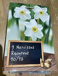 3 x Narcissus DAFFODIL recurvus  BULB Plant Aug-dec