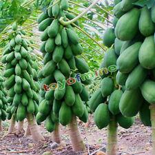 8Pcs Home Garden Maradol Papaya Seeds Vegetable Fruit Outdoor Yard Plants SeedS