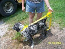 Training Martingale Style Dog Collar Grey Hounds