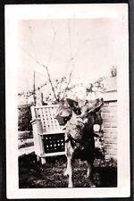VINTAGE PHOTOGRAPH 1925-1935 GERMAN SHEPHERD DOG SOUTH NORTH CAROLINA OLD PHOTO