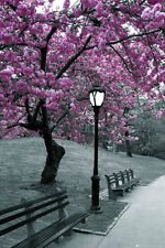 Park with Purple Tree poster Beauty nature Black and white splash of color bench